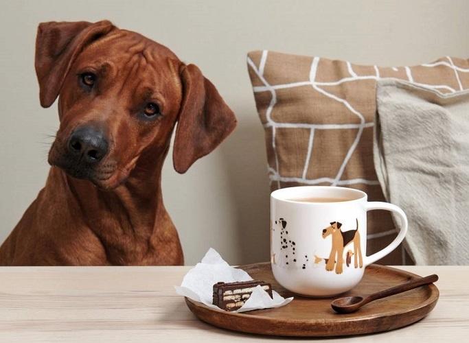 Coppa honden beker-ASA